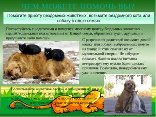 Посоветуйтесь с родителями и помогите местному центру бездомных животных –сде