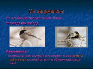 Мы задумались: От чего больше страдают зимой птички: от голода или холода Ока