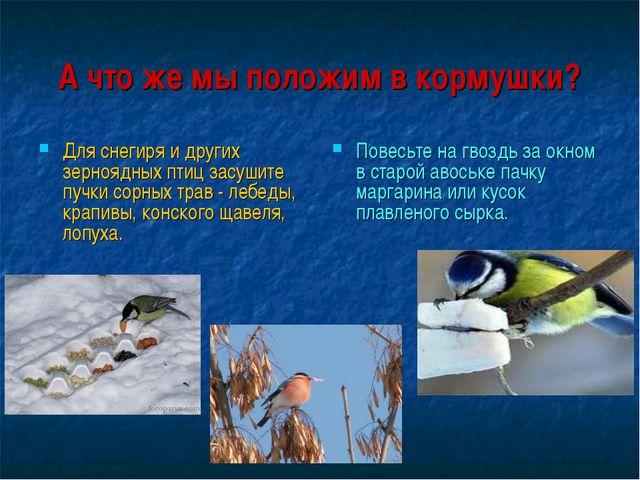 А что же мы положим в кормушки? Для снегиря и других зерноядных птиц засушите...
