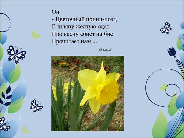 Он - Цветочный принц-поэт, В шляпу жёлтую одет. Про весну сонет на бис Прочит...