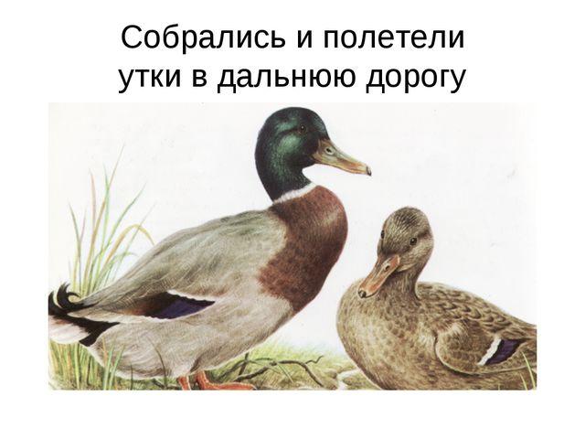 Собрались и полетели утки в дальнюю дорогу