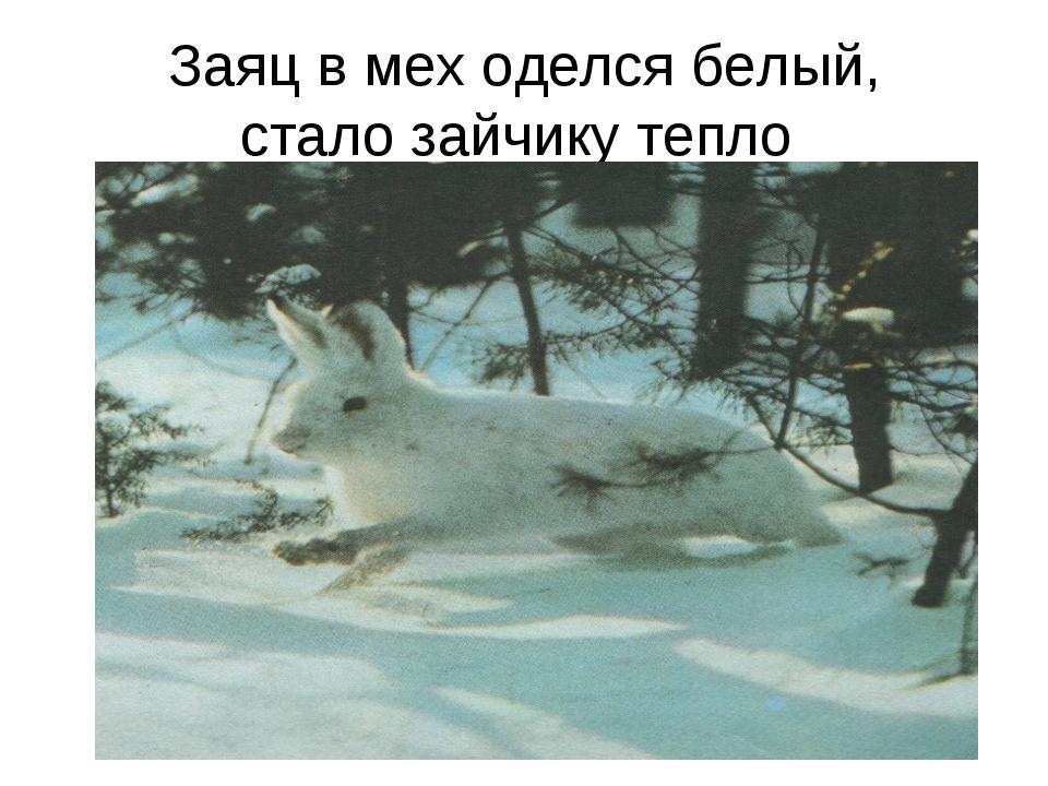 Заяц в мех оделся белый, стало зайчику тепло