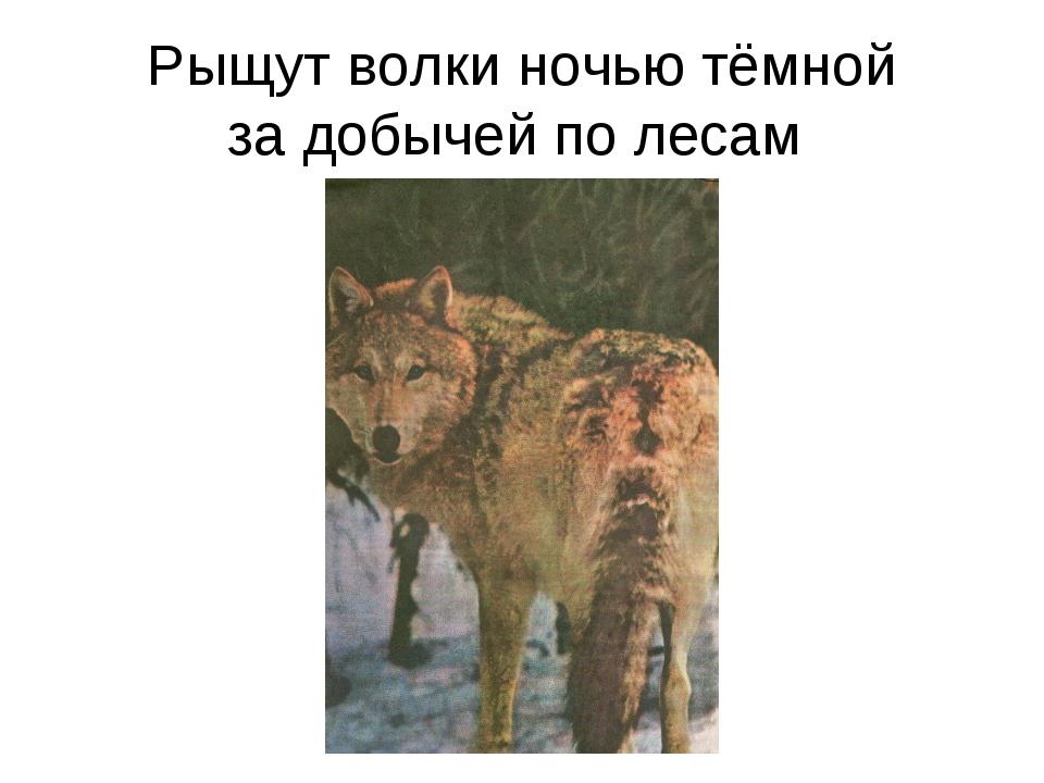 Рыщут волки ночью тёмной за добычей по лесам