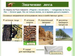 Значение леса В старину на Руси говорили: «Рядом с лесом жить— голодному не