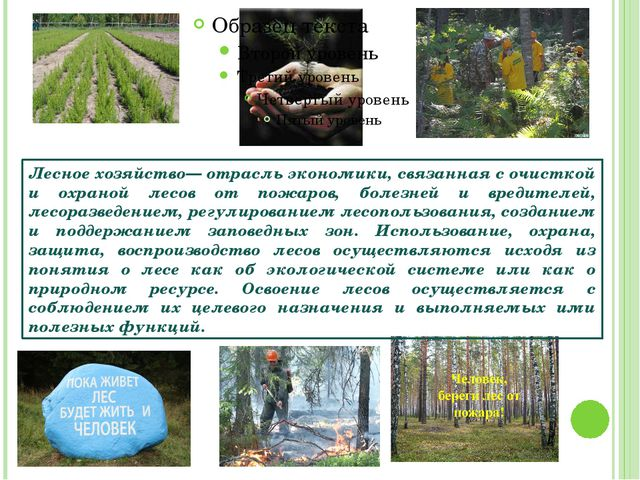 Лесное хозяйство— отрасль экономики, связанная с очисткой и охраной лесов от...