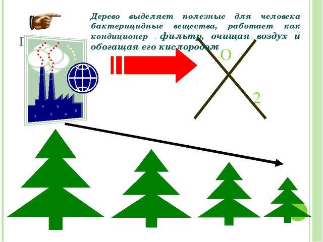 Проблемы O 2 Дерево выделяет полезные для человека бактерицидные вещества, ра...