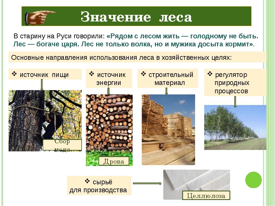 Значение леса В старину на Руси говорили: «Рядом с лесом жить— голодному не...