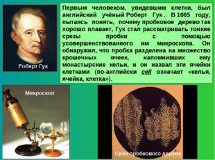 Первым человеком, увидевшим клетки, был английский учёныйРоберт Гук. В1665