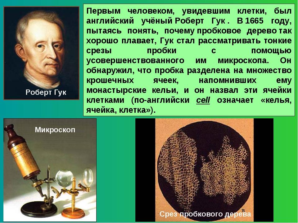 Первым человеком, увидевшим клетки, был английский учёныйРоберт Гук. В1665...