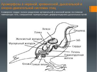 Ароморфозы в нервной, кровеносной, дыхательной и опорно-двигательной системах