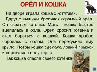 ОРЁЛ И КОШКА На дворе играла кошка с котятами. Вдруг с вышины бросился огромн