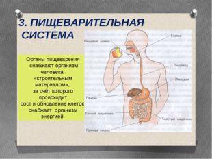 3. ПИЩЕВАРИТЕЛЬНАЯ СИСТЕМА Органы пищеварения снабжают организм человека «стр