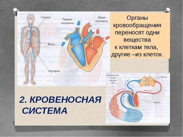 2. КРОВЕНОСНАЯ СИСТЕМА Органы кровообращения переносят одни вещества к клетка...