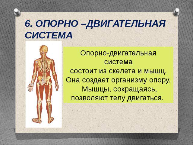 6. ОПОРНО –ДВИГАТЕЛЬНАЯ СИСТЕМА Опорно-двигательная система состоит из скелет...