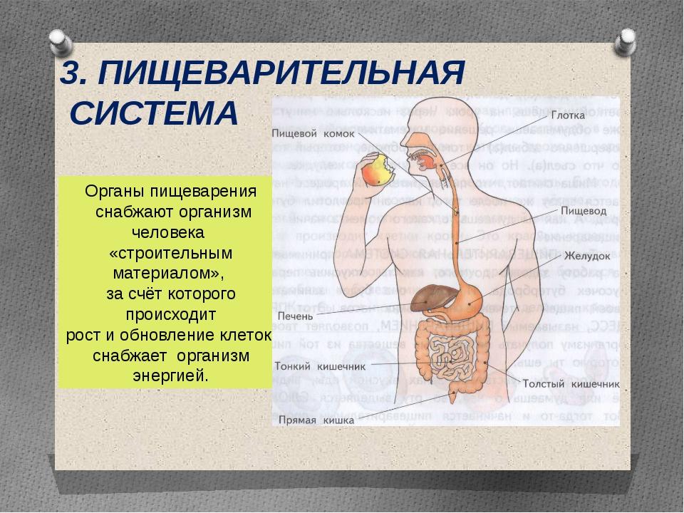 3. ПИЩЕВАРИТЕЛЬНАЯ СИСТЕМА Органы пищеварения снабжают организм человека «стр...