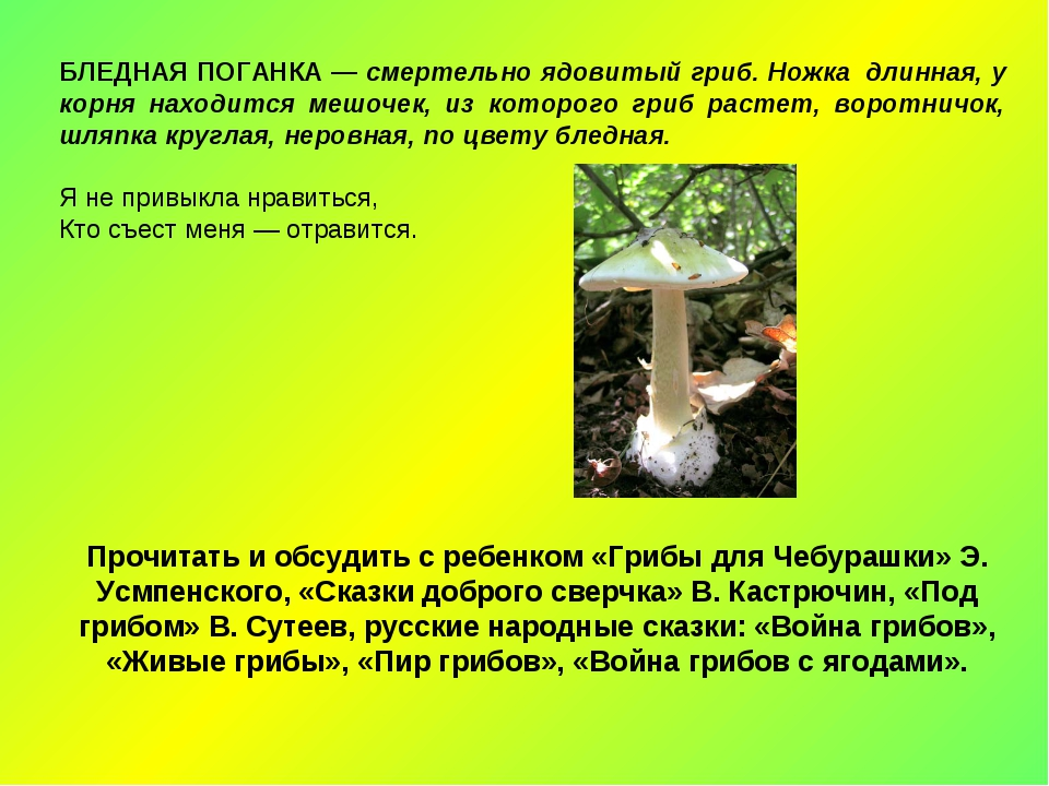 БЛЕДНАЯ ПОГАНКА — смертельно ядовитый гриб. Ножка длинная, у корня находится...