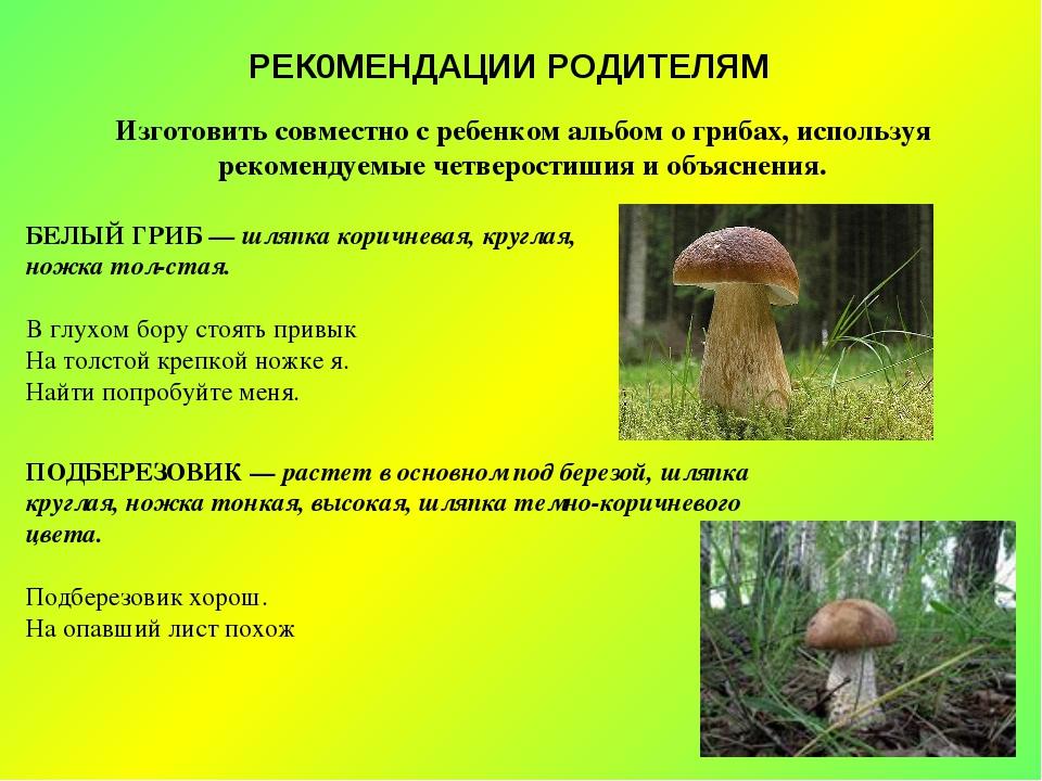 РЕК0МЕНДАЦИИ РОДИТЕЛЯМ Изготовить совместно с ребенком альбом о грибах, испол...