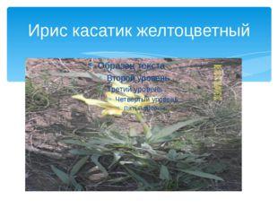 Ирис касатик желтоцветный