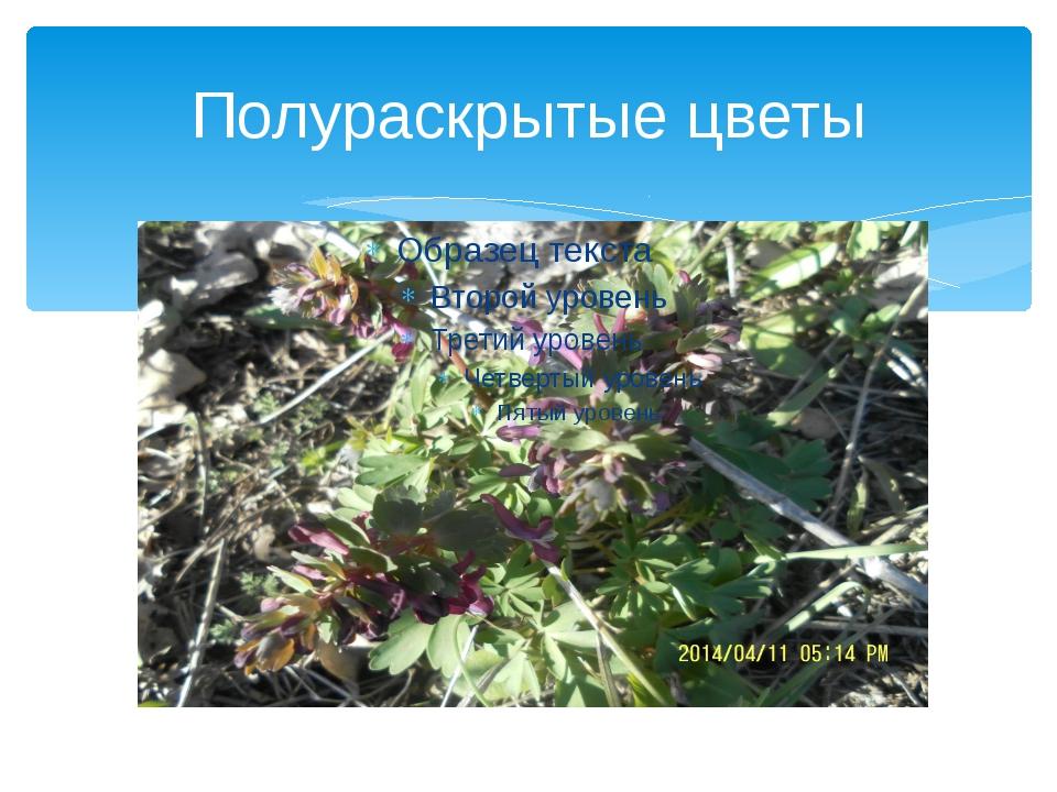 Полураскрытые цветы