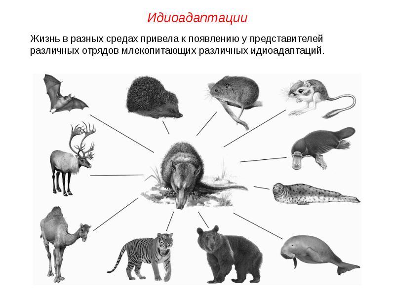 http://mypresentation.ru/documents/0d355ba4e46d859ffa8c2f0d9ff121da/img8.jpg