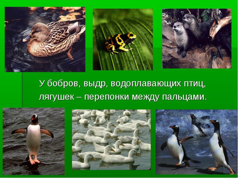 http://rpp.nashaucheba.ru/pars_docs/refs/111/110743/img11.jpg