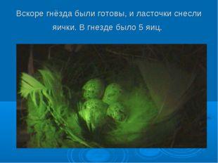 Вскоре гнёзда были готовы, и ласточки снесли яички. В гнезде было 5 яиц.