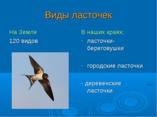 Виды ласточек На Земле 120 видов В наших краях: ласточки-береговушки городски