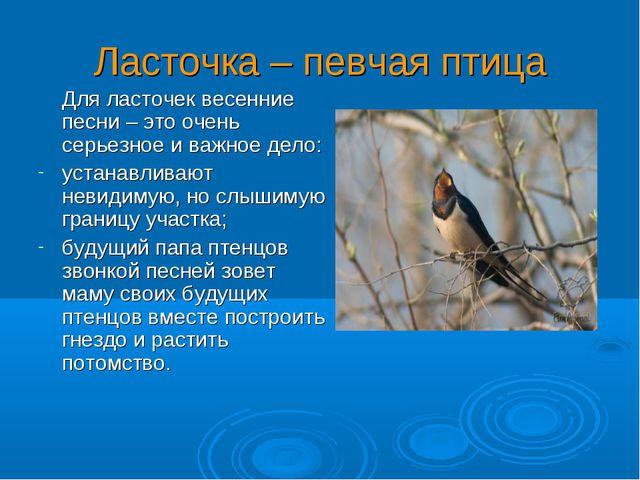 Ласточка – певчая птица Для ласточек весенние песни – это очень серьезное и в...