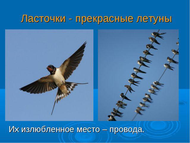 Ласточки - прекрасные летуны Их излюбленное место – провода.