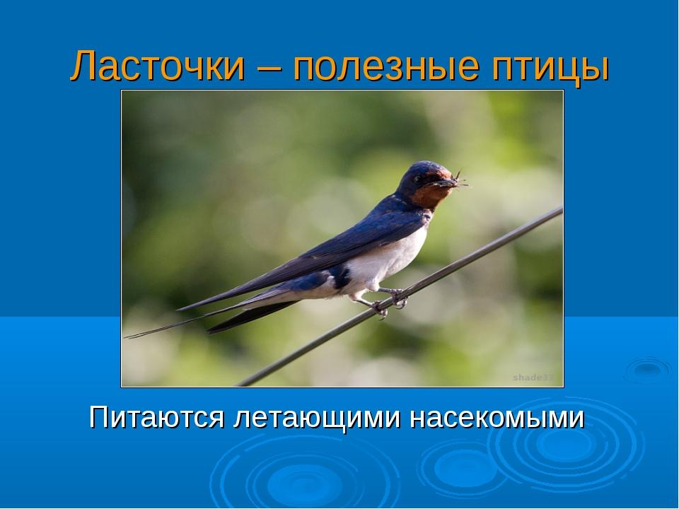 Ласточки – полезные птицы Питаются летающими насекомыми