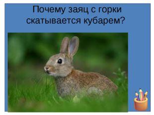 Почему заяц с горки скатывается кубарем?
