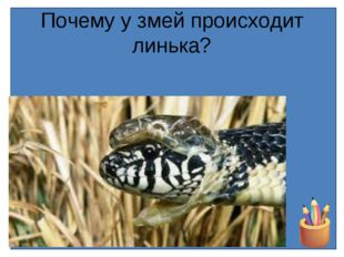Почему у змей происходит линька?