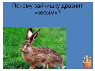 Почему зайчишку дразнят «косым»?