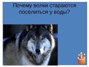 Почему волки стараются поселиться у воды?