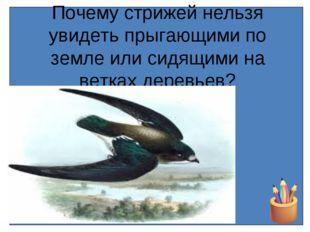 Почему стрижей нельзя увидеть прыгающими по земле или сидящими на ветках дере