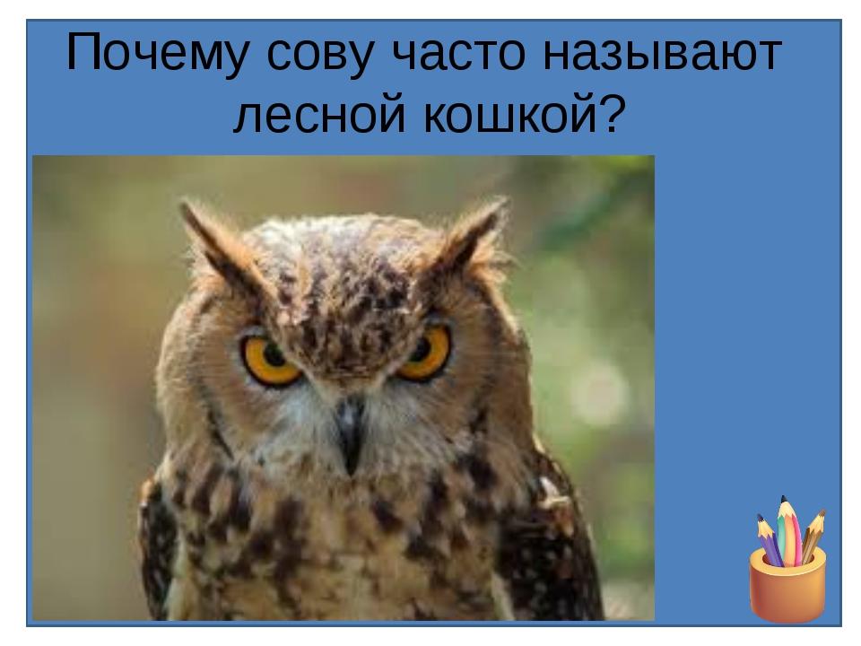 Почему сову часто называют лесной кошкой?