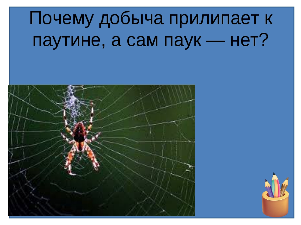 Почему добыча прилипает к паутине, а сам паук — нет?