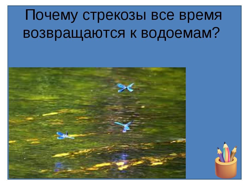 Почему стрекозы все время возвращаются к водоемам?