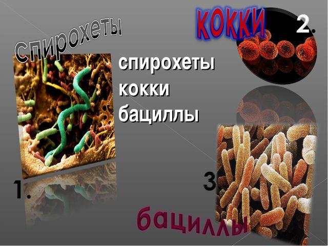 спирохеты кокки бациллы