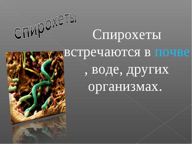 Спирохеты встречаются впочве, воде, других организмах.
