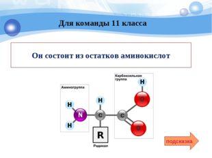 Он состоит из остатков аминокислот подсказка Для команды 11 класса