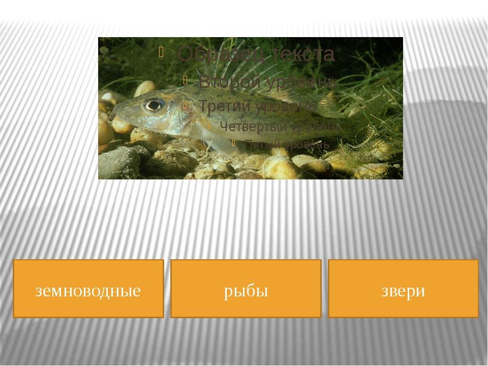 земноводные рыбы звери