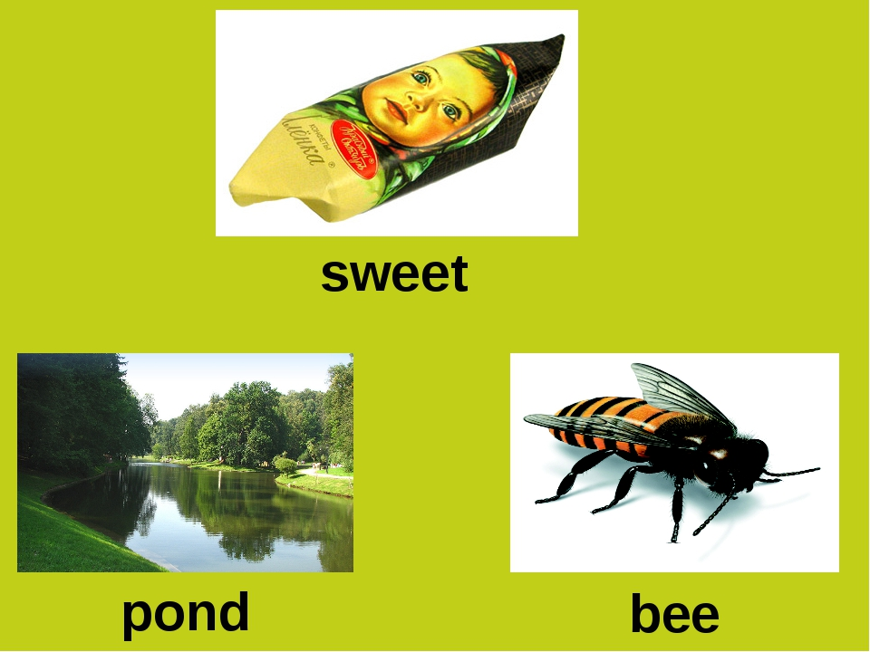 sweet pond bee