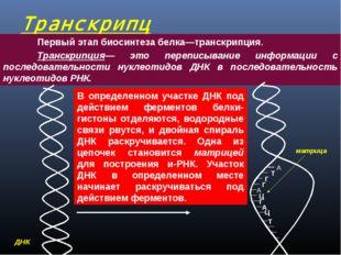 Транскрипция  Первый этап биосинтеза белка—транскрипция. Транскрипция— эт