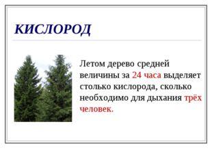 КИСЛОРОД Летом дерево средней величины за 24 часа выделяет столько кислорода,