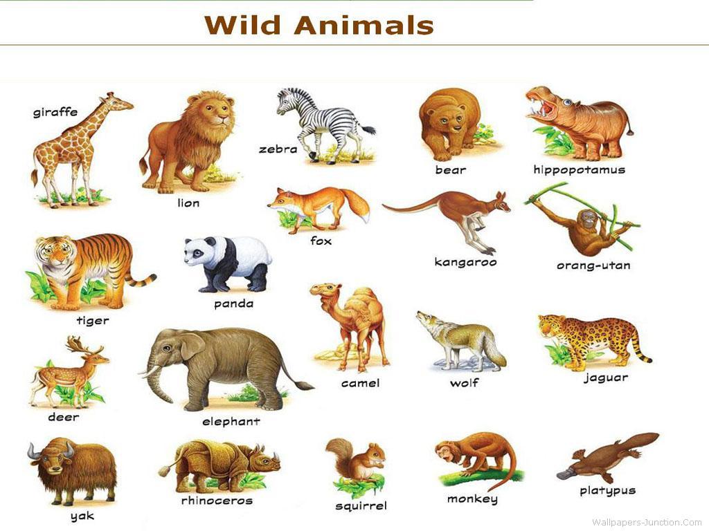 Wild Animals — Stock Image