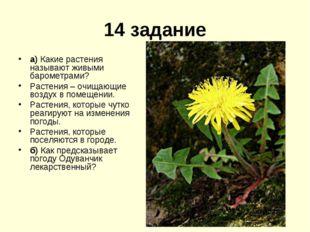 14 задание а) Какие растения называют живыми барометрами? Растения – очищающи