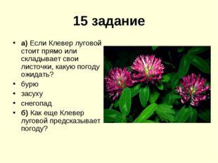 15 задание а) Если Клевер луговой стоит прямо или складывает свои листочки, к