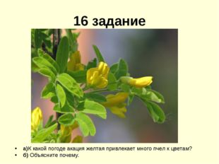 16 задание а)К какой погоде акация желтая привлекает много пчел к цветам? б)
