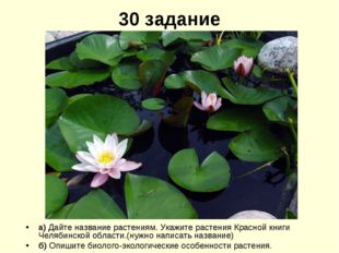 30 задание а) Дайте название растениям. Укажите растения Красной книги Челяби